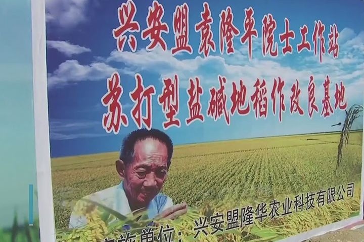 Alibaba, China's 'Father of Hybrid Rice' to Double Farmer Incomes in Inner Mongolia