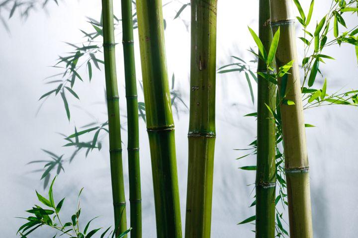 Bamboo Shoots Higher