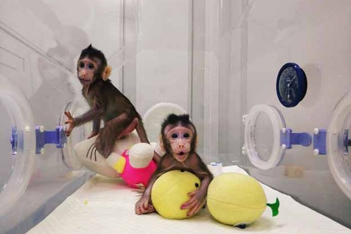 China Clones Monkey Twins in Revolutionary Genetics Breakthrough