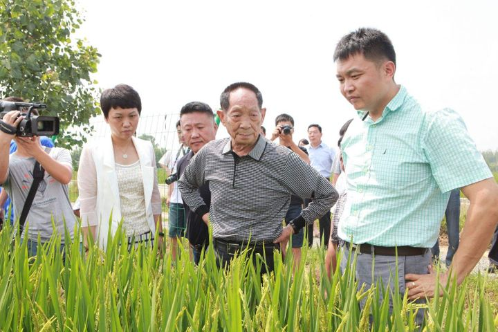 China's 'Father of Hybrid Rice' Plans to Cultivate High-Yield Species in Saline-Alkali Soil