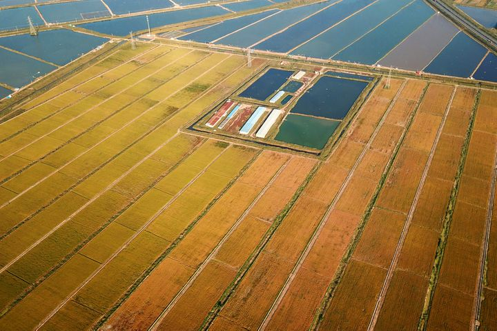 China's 'Father of Hybrid Rice' Sets Up China's First Sea Rice Cold Breeding Station