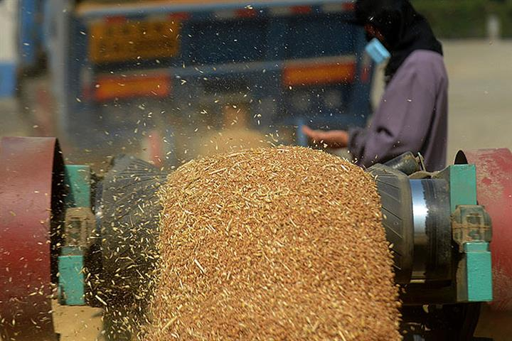 China's Grain Prices Will Stay Stable on Bumper Harvests, Ample Reserves, Ministry Says