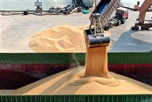 China Imported 17.7% More Soybeans in the First Seven Months