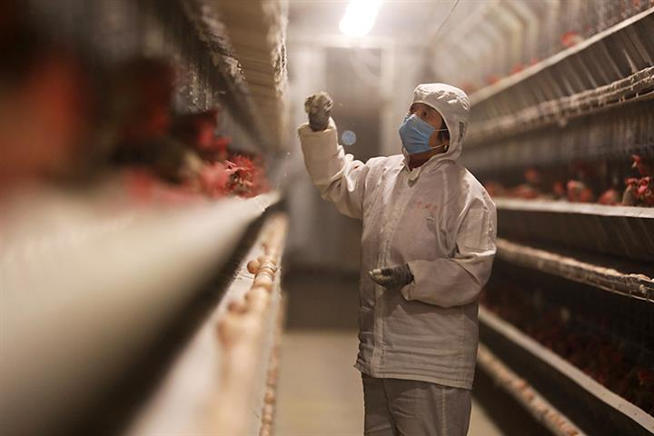 China Lays Out 15-Year Plan to Improve Livestock, Poultry Genetics