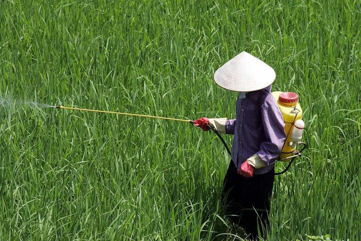 China's Pesticide Use Has Dropped in the Past Three Years, Official Says