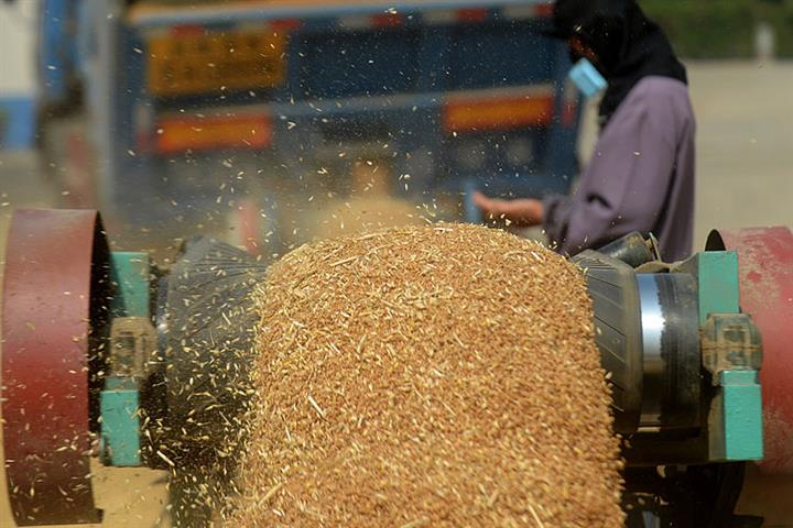 China Harvests Over 650 Million Tons of Grain for Sixth Straight Year