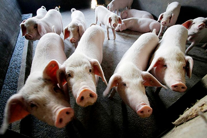 China Reports Swine Fever Outbreaks in Beijing, Xi'an, Sichuan