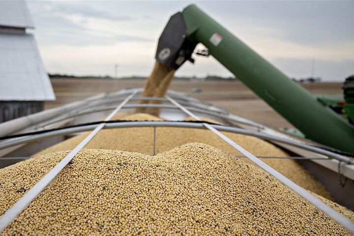 Chinese Enterprises Halt New Purchases of US Agricultural Products