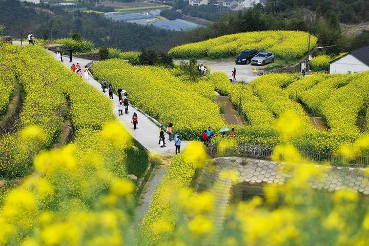 Chinese Eye Short Trips for April's Tomb-Sweeping Holiday as Virus Worries Subside