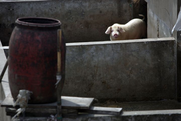 Chinese Official Confirms Livestock Disease Cases, Cannot Rule Out More