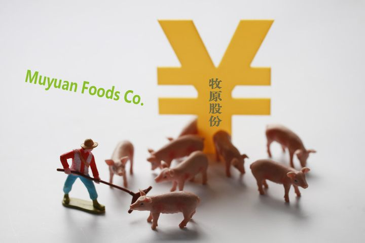 Chinese Pork King Muyuan's Net Profit Rose Over 10 Times Last Year, It Predicts