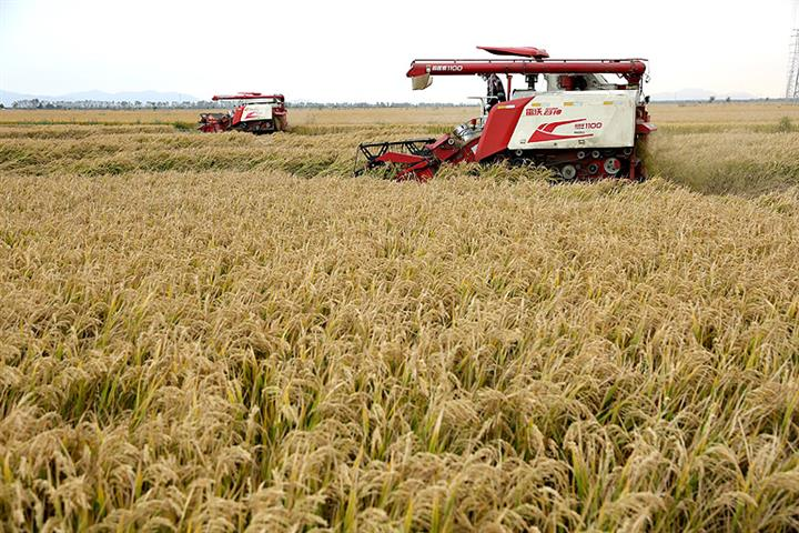 Chinese Scientists to Mass Plant 'Seawater Rice'