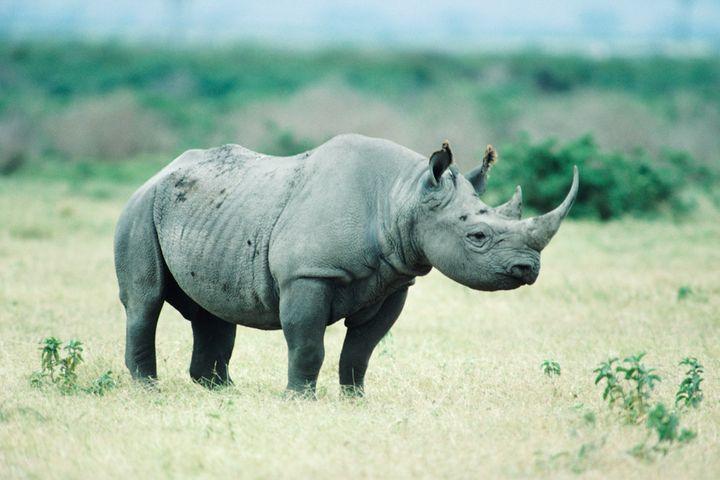 Economic, Financial Market Volatility Poses Biggest Gray Rhino Threat to China, SAFE Says