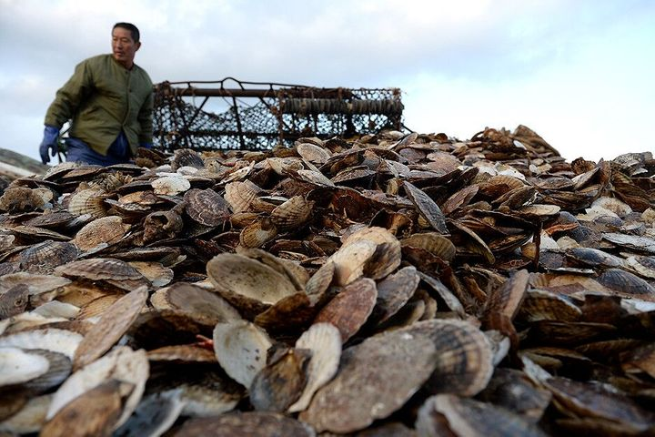 China's Zoneco Denies Trying to Pass Off Japan, SK Scallops as Its Own After Crop Failure
