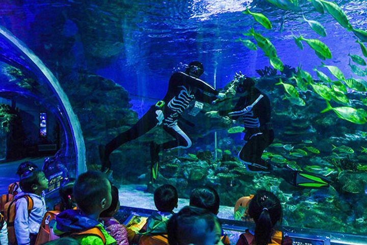 Haichang Ocean Park Allies with JD Travel
