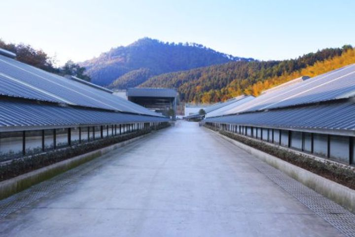 NetEase's Agricultural Affiliate Weiyang Sets Up Its Second Pig Farm in Gaoan