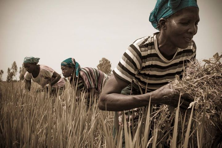 The First Industrial Hub for Organic Inputs in Africa Is Ready to Take on Europe