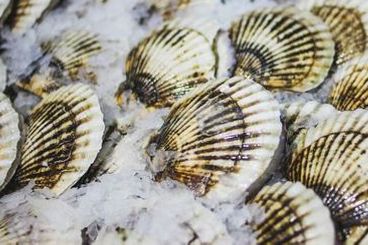 Zoneco Will Strengthen Early Warning Systems in Wake of Mass Scallop Die-Off